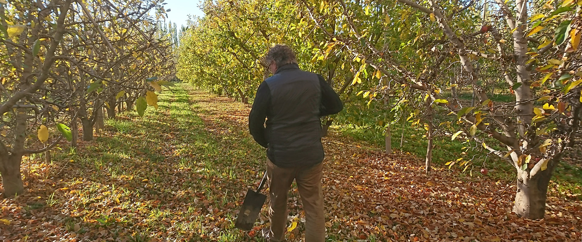 Assessment of apple and pear farm in Argentina