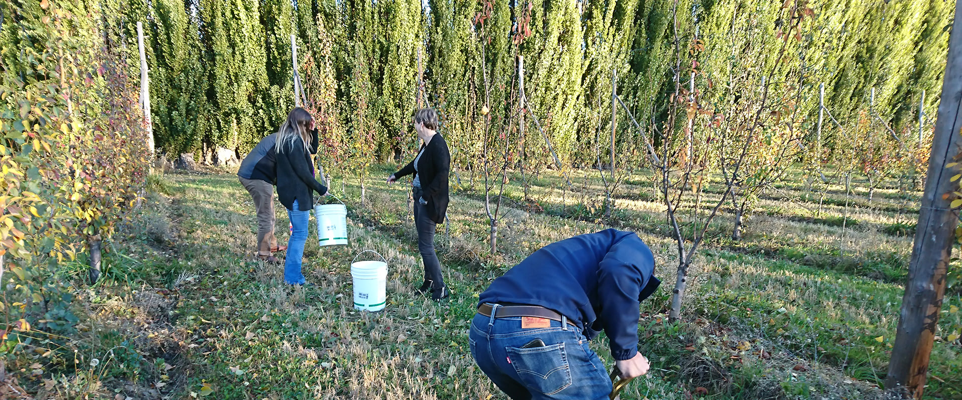 Taking soil samples on apple and pear farm in Argentina